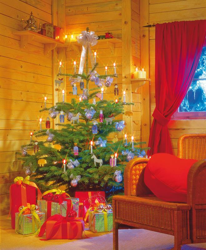 Echte Tannenbaum Kaufen.Wann Weihnachtsbaum Kaufen Selbst De