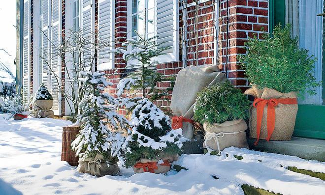 Winterharte Kübelpflanzen   selbst.de