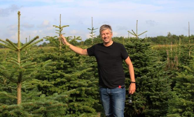 So bleibt der Weihnachtsbaum grün