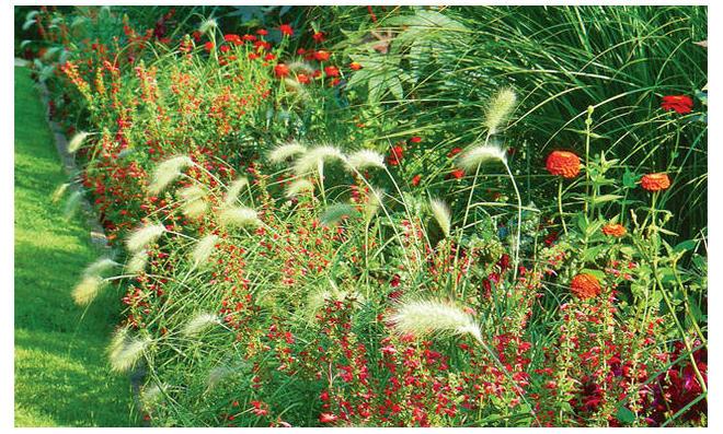 Gräser, Gras & Rittersporn