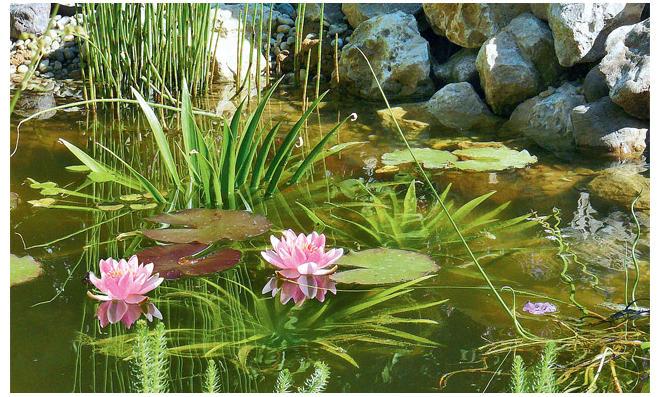 Fabelhaft Teich bepflanzen | selbst.de &JY_87