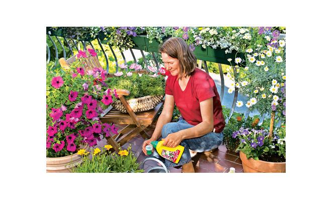 Blumendünger wöchentlich einsetzen