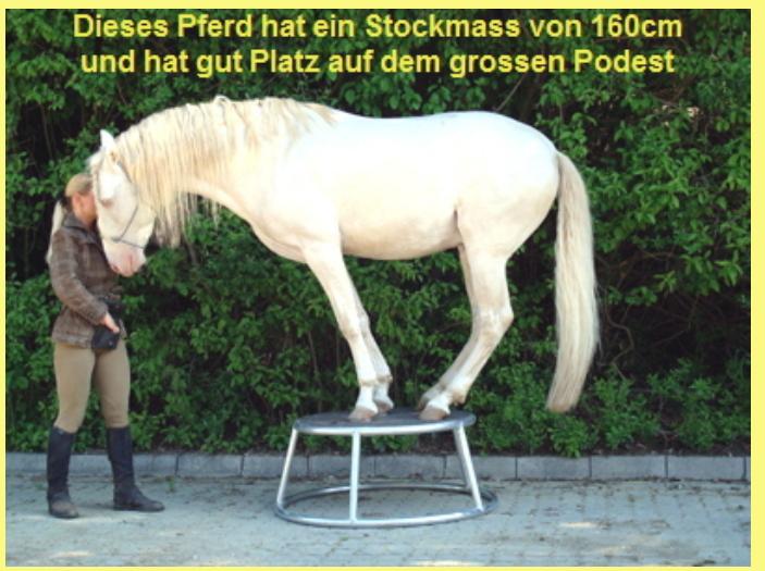 Pferdepodest Selbst De Diy Forum