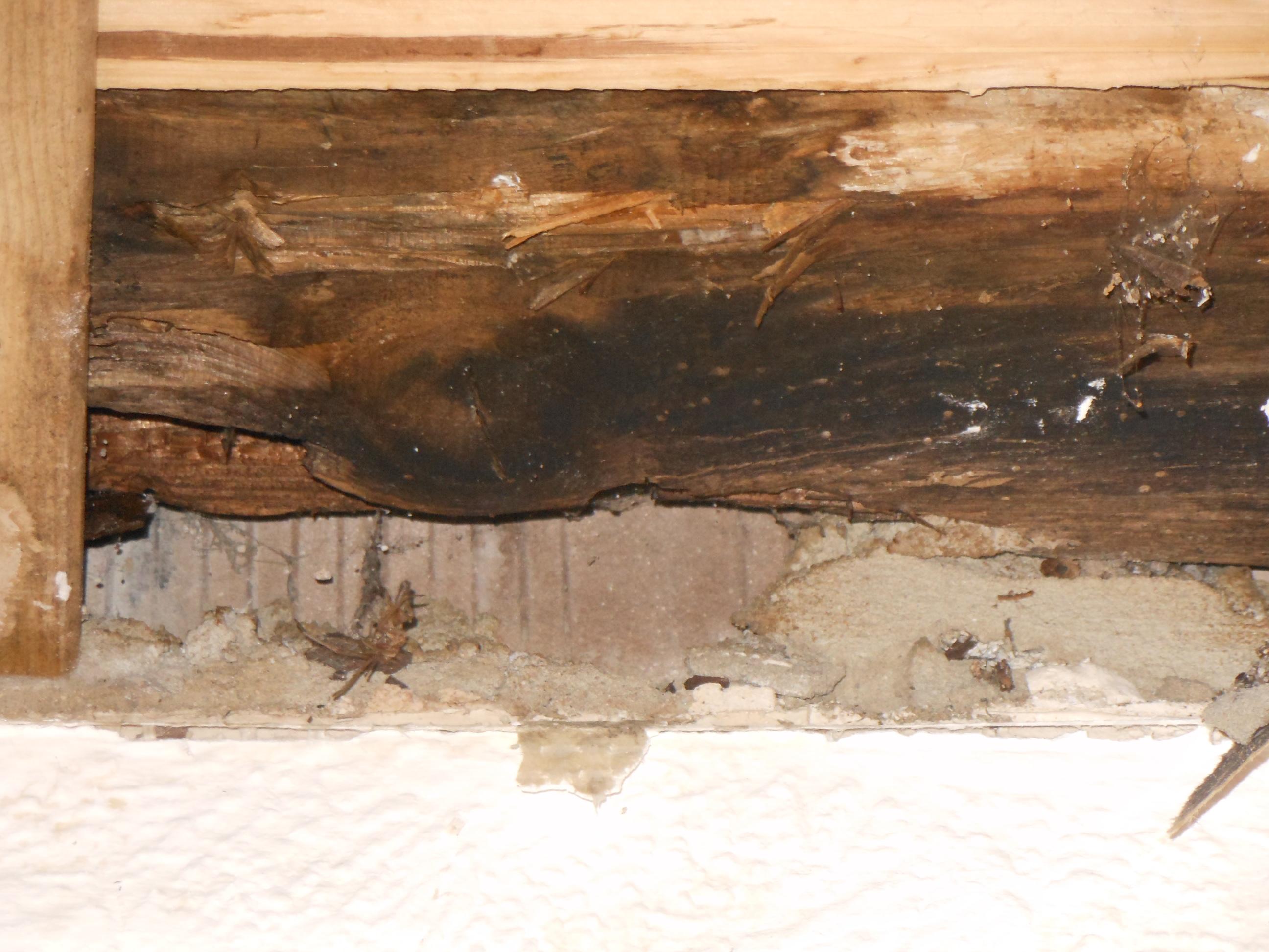 Fußboden Balken Osb ~ Fußboden balken osb anleitung osb platten richtig verlegen talu