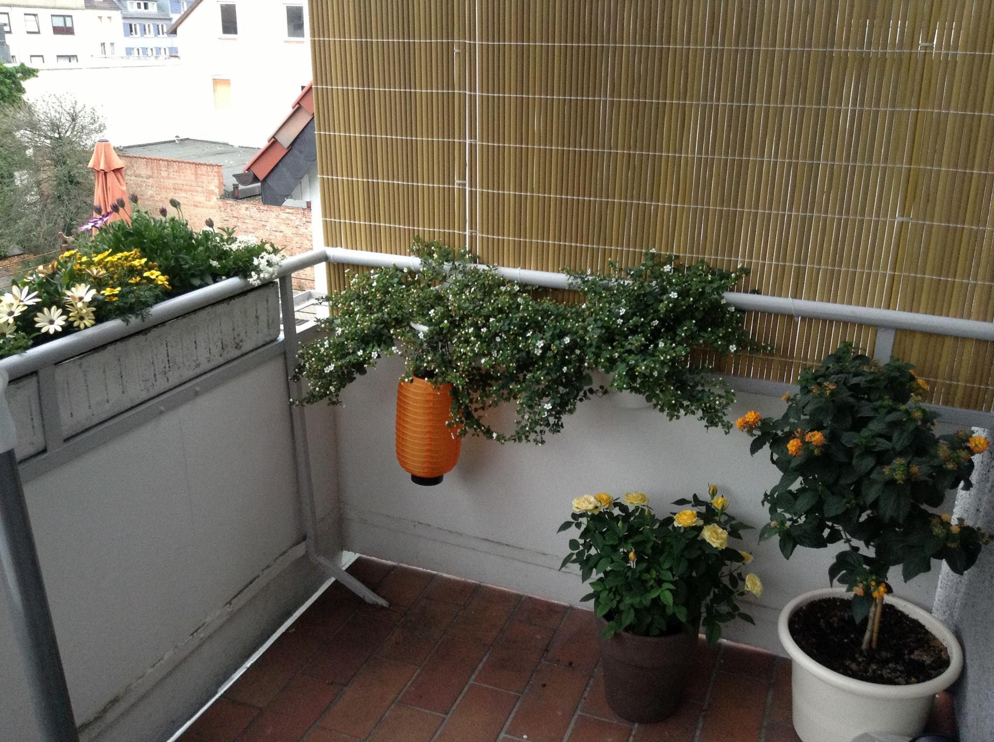 Seitlicher Sichtschutz Am Balkon Selbst De Diy Forum